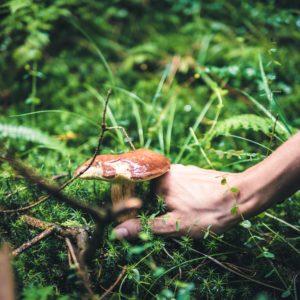 Identifiez les champignons des bois avec le CPIE